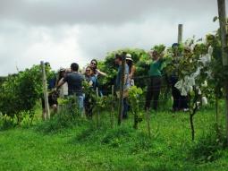 viagem de estudos_ vinícola santa eulália_por carlo giacomoni (12)