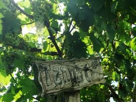 viagem de estudos_ vinícola santa eulália_por carlo giacomoni (13)