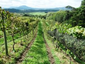 viagem de estudos_ vinícola santa eulália_por carlo giacomoni (14)