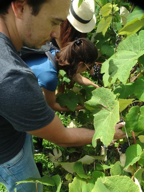 viagem de estudos_ vinícola santa eulália_por carlo giacomoni (2)