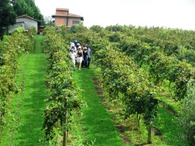 viagem de estudos_ vinícola santa eulália_por carlo giacomoni (5)