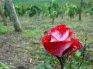 viagem de estudos_vinhas da serra_por carlo giacomoni (14)