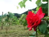 viagem de estudos_vinhas da serra_por carlo giacomoni (15)